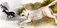 Levitating White Dog