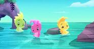 Seahorse-The Seahorse Roundup07