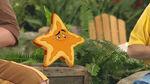 Sandy-Starfish Serenade01