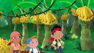 Banana grove02
