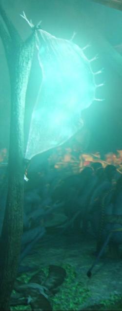 Bladderlantern2