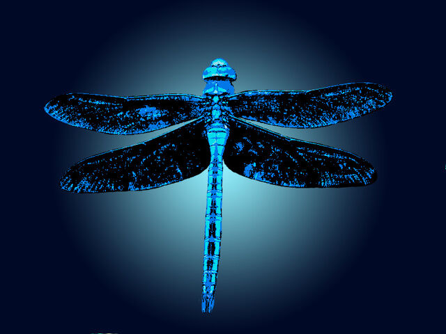 File:Dragonfly Fun Logo.jpg