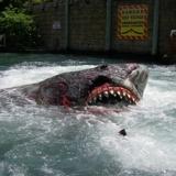 USF shark