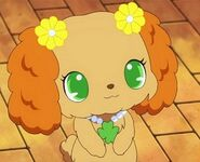 Prase jewelpet full 199456 8752