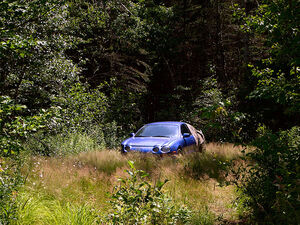 Car.forest