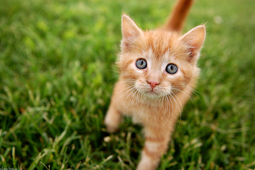 File:Gingerkit.jpg