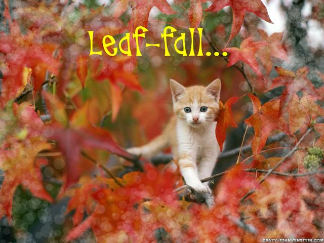 File:Leaf-fall.png