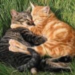 File:Cats cuddle-150x150.jpg