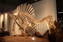 Subadult Spinosaurus