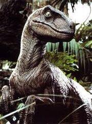 Raptor profile