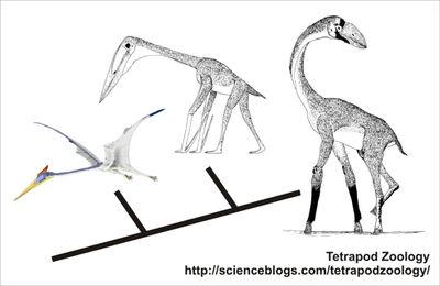 How azhdarchids evolved flightlessness