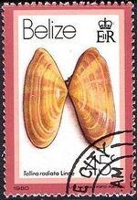 Belize 1980 Shells and Sea Snails k