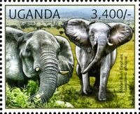 Uganda 2012 Fauna of African Great Lakes Region - African Elephant - African Bush Elephant b