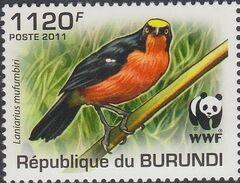 Burundi 2011 WWF Papyrus Gonolek d