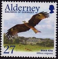 Alderney 2002 Migrating Birds Part 1 Raptors b
