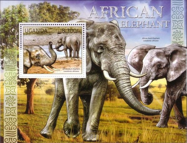 Uganda 2012 Fauna of African Great Lakes Region - African Elephant - African Bush Elephant g
