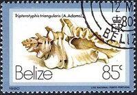 Belize 1980 Shells and Sea Snails m