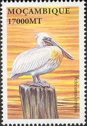 Mozambique 2002 Sea Birds of the World m
