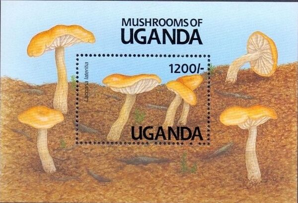 Uganda 1991 Mushrooms of Uganda j