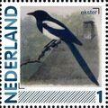 Netherlands 2011 Birds in Netherlands a10.jpg