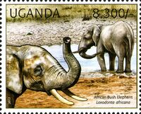 Uganda 2012 Fauna of African Great Lakes Region - African Elephant - African Bush Elephant e