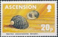 Ascension 1983 Sea Shells d