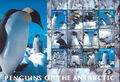 British Antarctic Territory 2003 Penguins of the Antarctic Sa.jpg