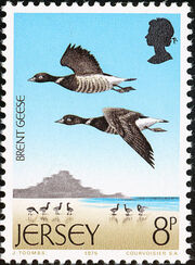 Jersey 1975 Sea Birds c