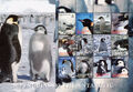 British Antarctic Territory 2006 Penguins of the Antarctic Sa.jpg