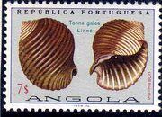 Angola 1974 Sea Shells n