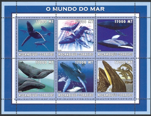 Mozambique 2002 The World of the Sea - Whales 2 h