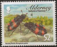 Alderney 2013 Alderney Beetles b