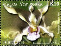 Papua New Guinea 2013 Orchids e
