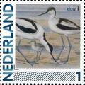 Netherlands 2011 Birds in Netherlands a31.jpg