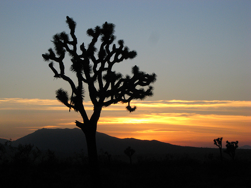 File:Desert Sunset 4.jpg