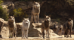 Akela and the Wolf Pack (Disney 2016)