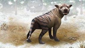 File:Hyaenodon.jpg