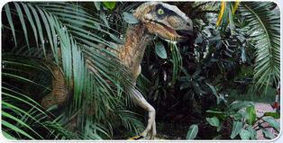 Archivo:Raptor10.jpg
