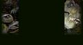 Миниатюра для версии от 15:27, мая 3, 2013