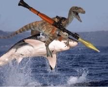 File:Shark roder.jpg