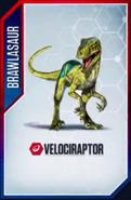 Velociraptor (2)