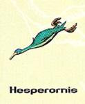 Hasperorni