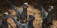 Raptor11