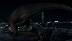 T. rex Limps