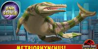 Metriorhynchus/Builder