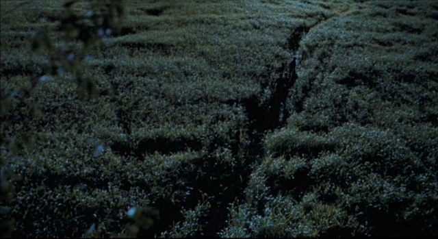 File:Long-Grass.png