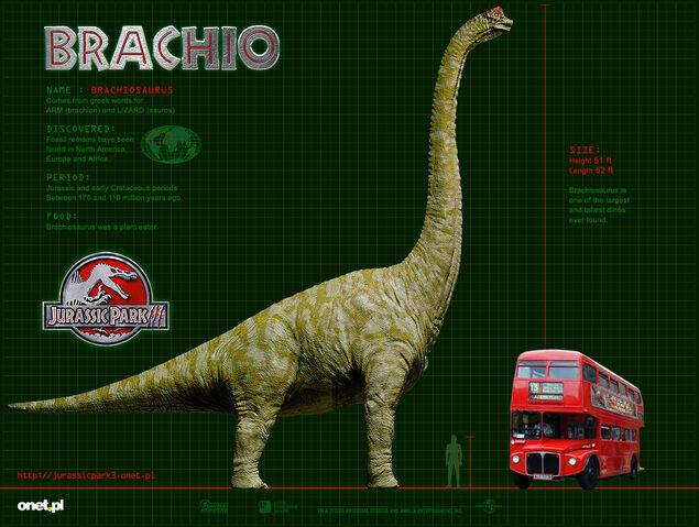 File:BRACHIO WP 1024.jpg