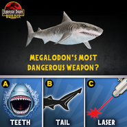 JPB Megalodon quiz 2