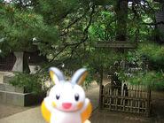 Emolga in Ichikawa, Chiba 8 (Katsushika Hachimangu Shrine)