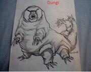 Dungi